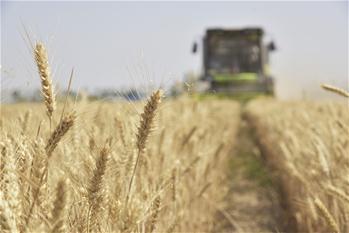 【高清圖集】全國夏糧收獲已近八成