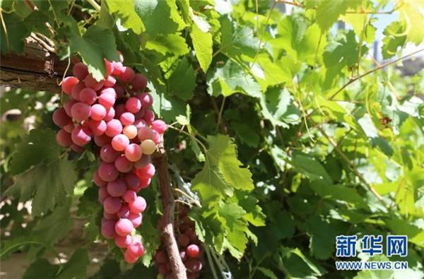 我國進口葡萄酒份額不斷增加