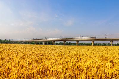 安徽:科技引領優質專用糧食生産