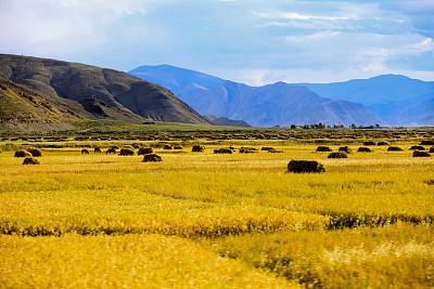 糧食儲備局:我國糧食儲備能夠滿足市場供應和應急需要