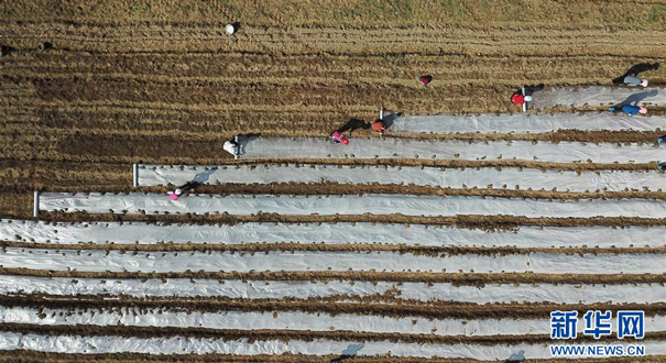 落實春管春種措施 夯實農業生産基礎——來自春耕備耕現場的報道