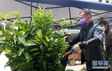 買果苗 備春種