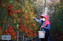 江西:春耕春種農事忙