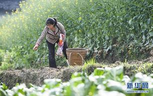 重慶武隆:春暖農事忙