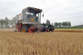 【高清圖集】小麥開鐮收割