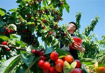 【圖集】河北遷安:休閒農業促增收