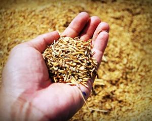 《中國農業産業發展報告2020》在京發布