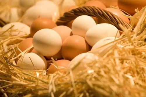 雞蛋價格秋後或回升