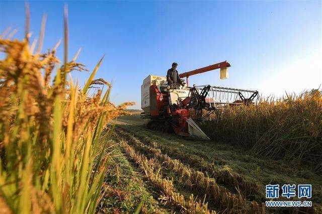 如何守牢糧食能源安全線