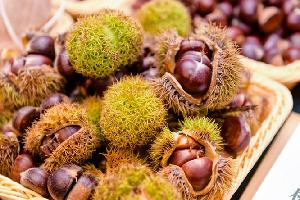 小栗子大市場 中國板栗出口43個國家和地區