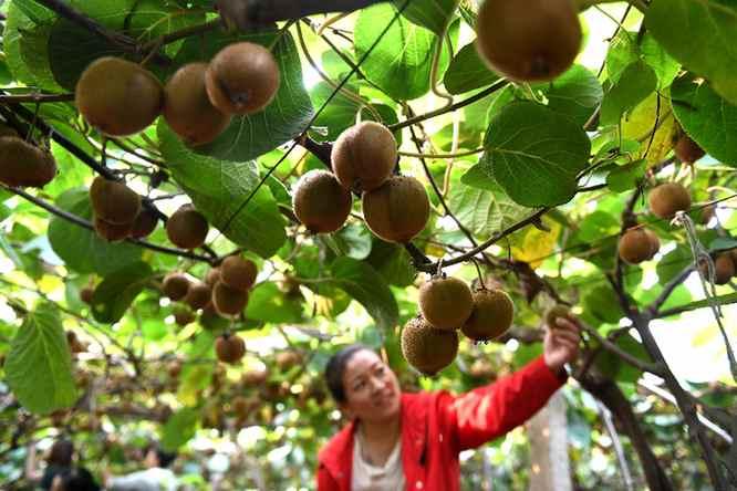 各地舉行多種活動歡慶中國農民豐收節