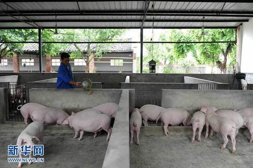 江西生豬産能連續12個月環比增長