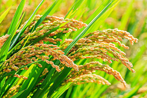 以全球創新資源助力中國農業高質量發展——訪拜耳作物科學大中華區總經理