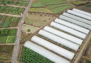 蔬菜産業助農 家門口增收