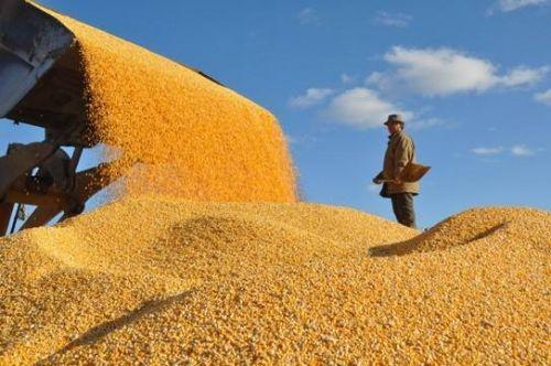 實施糧食安全戰略需多維發力