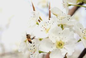 """中國農業科學院蜜蜂研究所創新産業發展 積極謀劃蜂業""""十四五""""科技發展"""