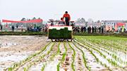 稅收數據顯示一季度農資供應充足