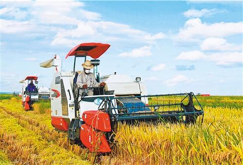 中國在非最大水稻種植項目再迎豐收