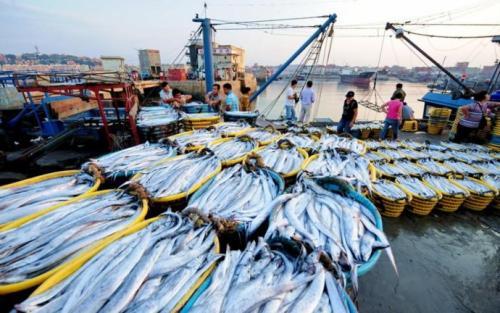 我國正加快漁業法修訂 推進水産養殖業綠色發展