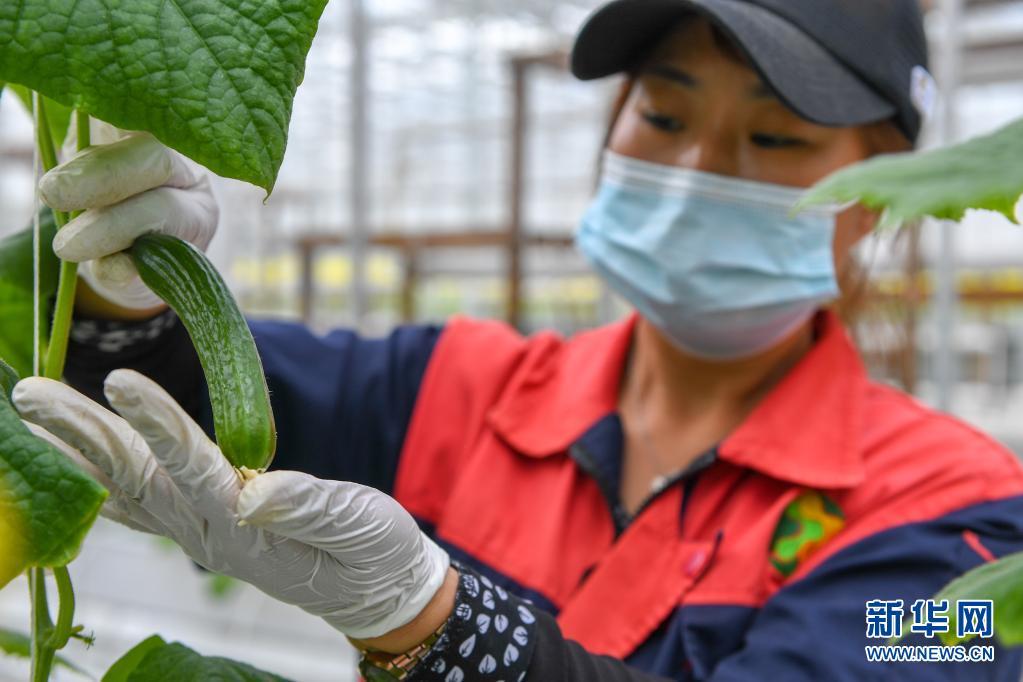 """智慧農業""""植物工廠"""":種菜不用土 産值超千萬"""