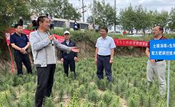 農業農村部農業主推技術土壤消毒技術破解百合連作障礙難題