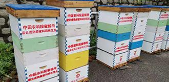 聚焦成熟蜂蜜生産 中國農業科學院構建蜂業綠色發展新模式
