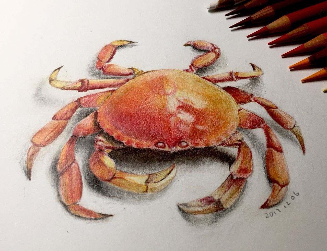 """""""紙螃蟹""""遇冷是一件好事"""