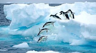 2018最具潛力旅遊目的地:南極不再遙不可及
