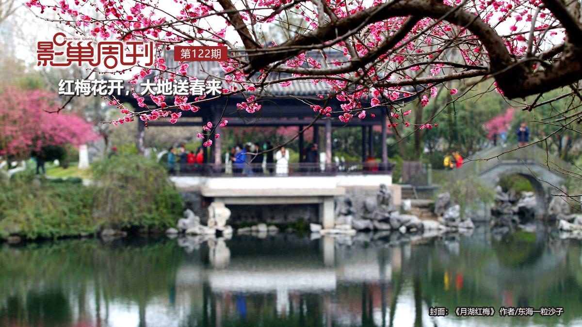 【影巢周刊】紅梅花開,大地送春來