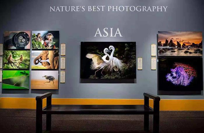 2018世界最佳自然攝影獎頒獎典禮在美國舉行 中國作品參展