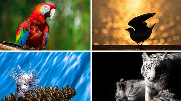 不可不知的動物拍攝經驗 拍出不一樣的精彩瞬間