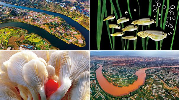 第五屆中國蔬菜攝影大賽在京評選揭曉