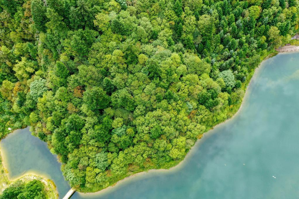 美出新高度!無人機航拍官鵝溝國家森林公園