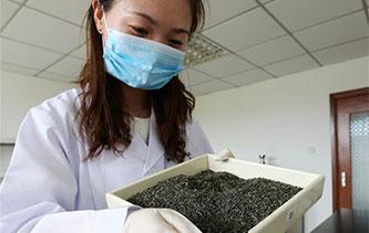 如何做一杯安全放心好茶?國家級茶葉檢測實驗室助力黃山茶出口