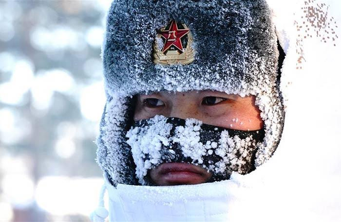 """攝影師實拍北極哨兵:挺立在風雪中的""""北極楊"""""""