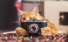 """有個攝影師主人有多重要?普通家貓也能成""""網紅""""!"""