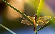 夏季昆蟲怎麼拍?你需要6個技巧