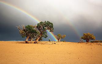 鏡頭帶你走進青海格爾木胡楊林 將沙漠染成金黃色蒼涼壯美