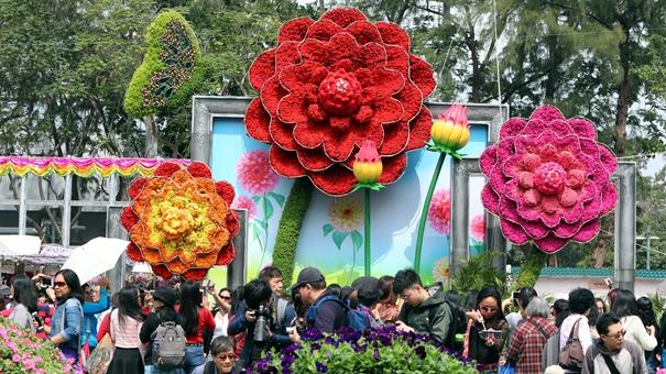 香港:又到一年賞花時