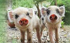 關愛農場動物