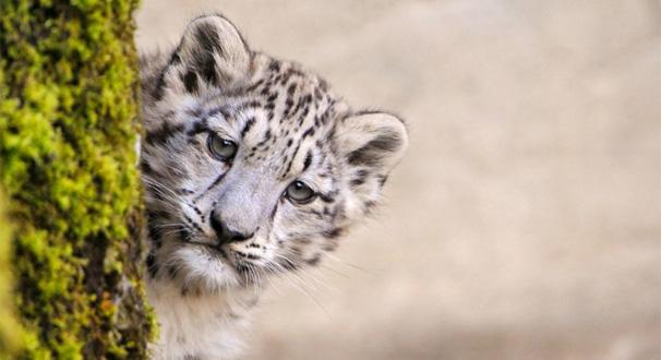 [視頻]珍稀動物頻頻出現 生態係統持續修復