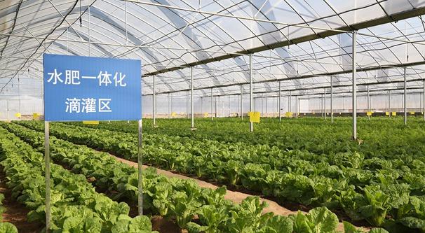 山東壽光:蔬菜提質增效 打造金字招牌