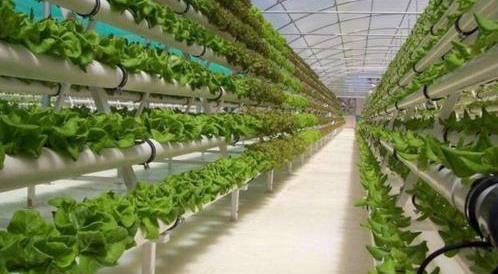 福建出臺七大舉措力促數字農業發展