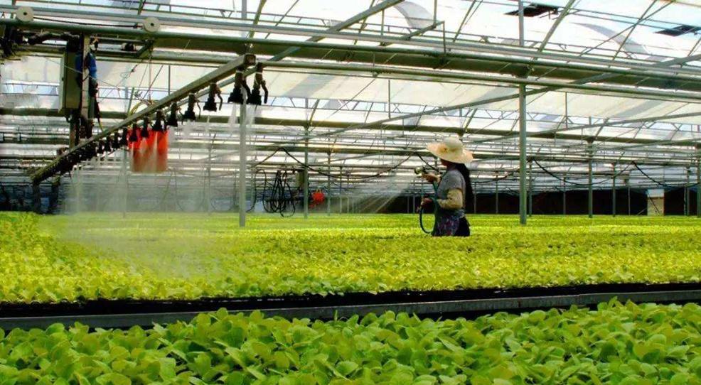 加快智慧農業發展 山東將建7萬余個益農信息社
