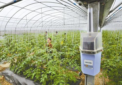 低功耗物聯網助力農業智慧管理