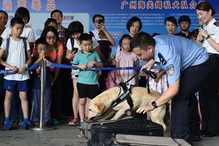 廣州海關舉辦緝毒犬開放日活動