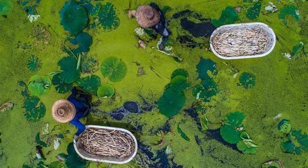 浙江湖州:新型生態農業促農民增收