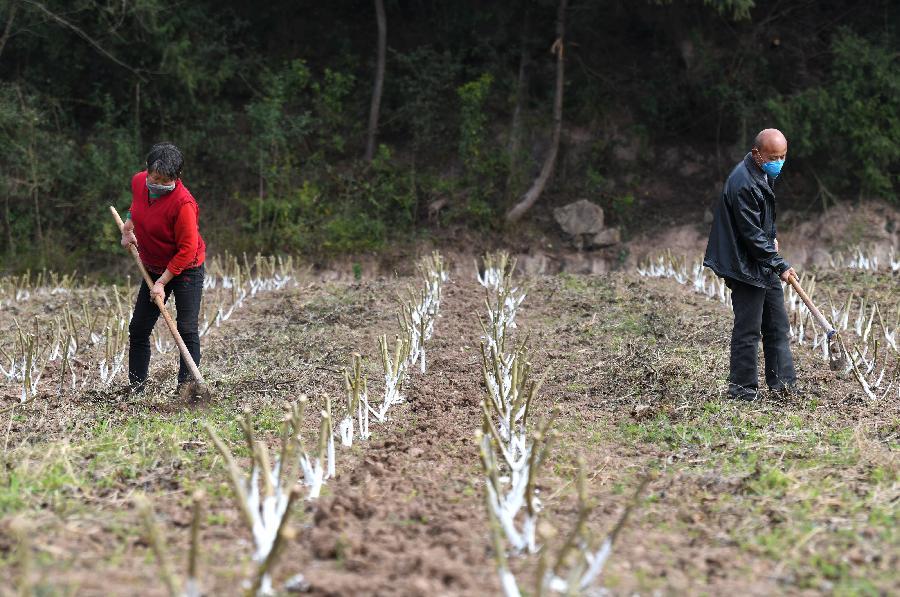 四川中江:抓農時 忙鋤草