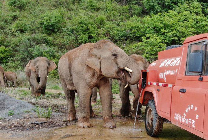 """人在""""象""""途:我看到全民護象的中國故事"""
