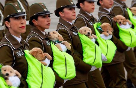 警犬寶寶參加盛大閱兵式 窩在女兵懷中登場